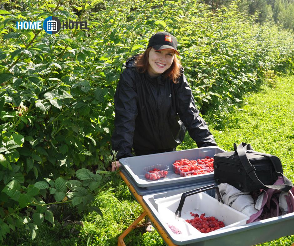 работа-за-границей-сбор-урожая-сбор-ягод-финляндия