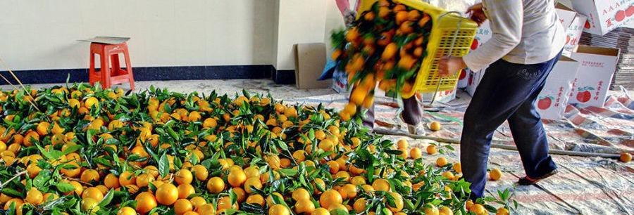 Работа в Испании сбор апельсинов