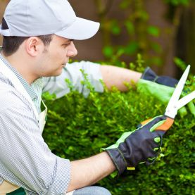 Вакансия озеленитель