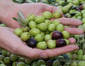 вакансии в польше на производстве оливок